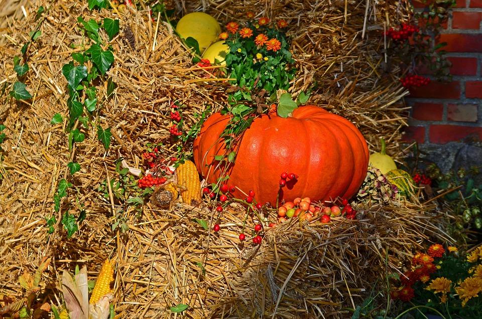 Картинки про осень на день урожая