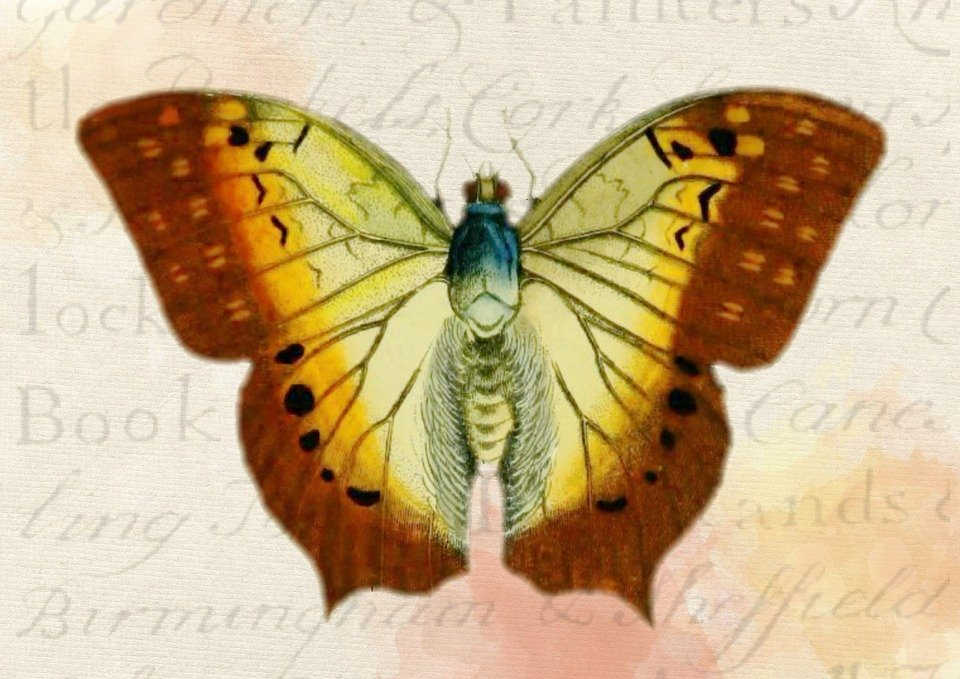 Butterfly Background Vintage Free Image On Pixabay