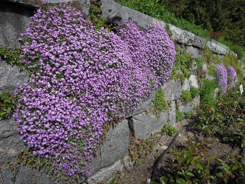 Fleur Le Jardin D\'Hiver Helsinki - Photo gratuite sur Pixabay