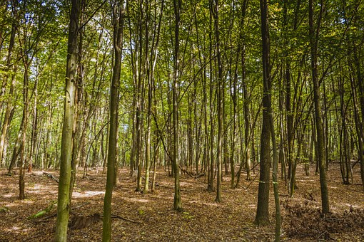 Forest, A Dense Forest, Spring, Nature