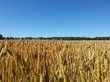 Sky, Cornfield, Blue Sky, Finnish