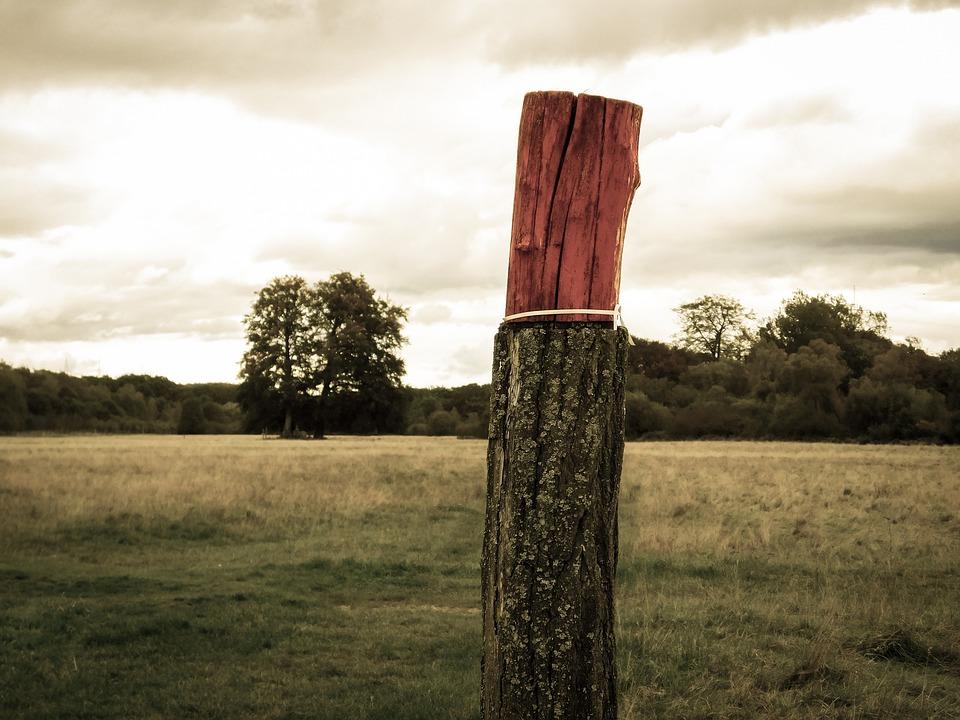 国家林草局:生态扶贫任务已完成90%以上