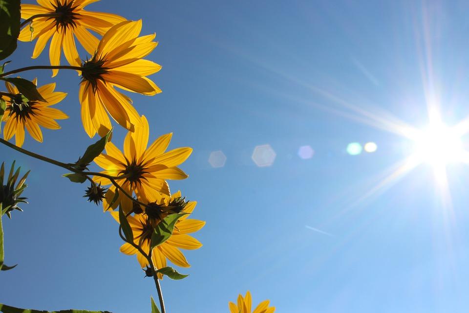 Fleurs printemps t - Initiatives fleurs et nature ...