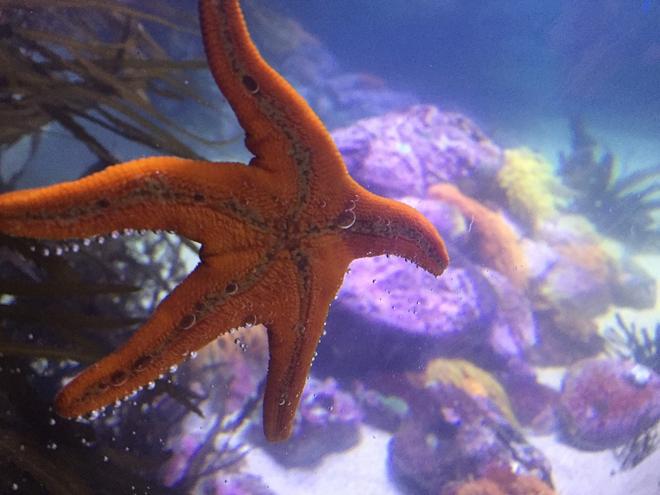 photo gratuite 201 toile de mer aquarium mer image gratuite sur pixabay 977442