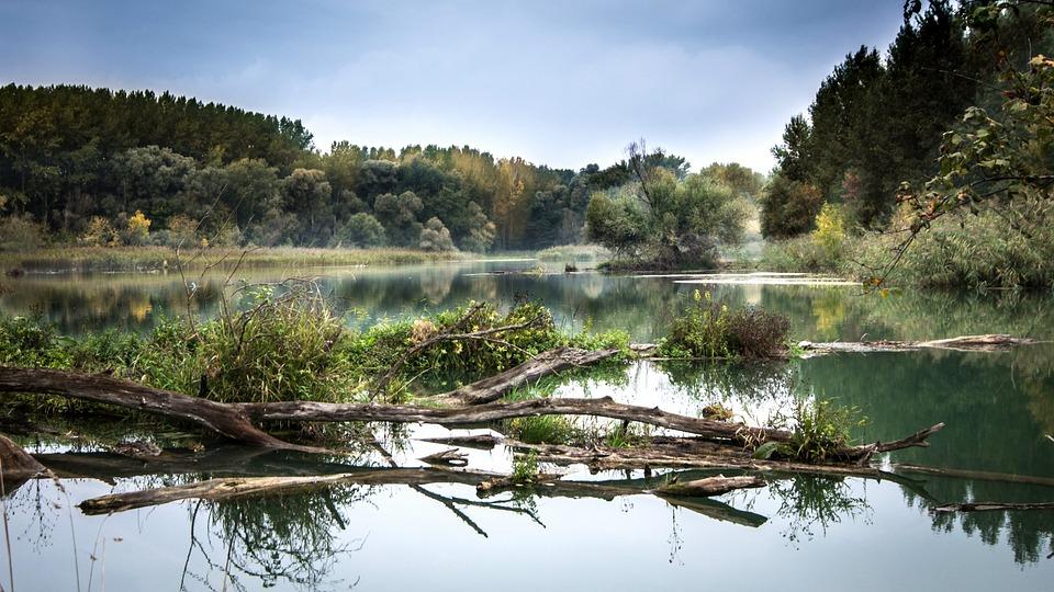 Rzeka, Dunaj, Odbicie, Słowacja, Drzewa, Wody