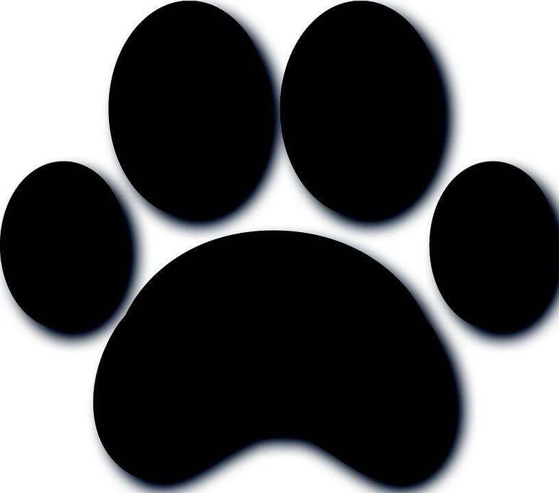 Patte chien texture image gratuite sur pixabay - Image patte de chien gratuite ...