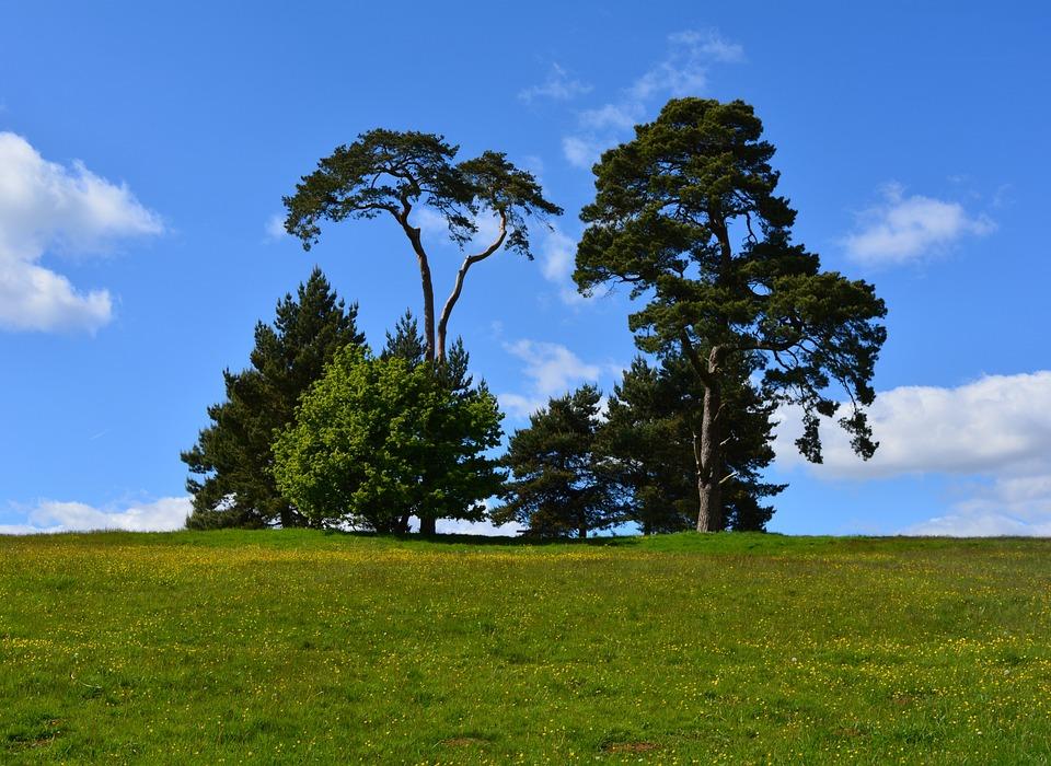 plantes arbres ciel herbe environnement vert - Arbre Ciel