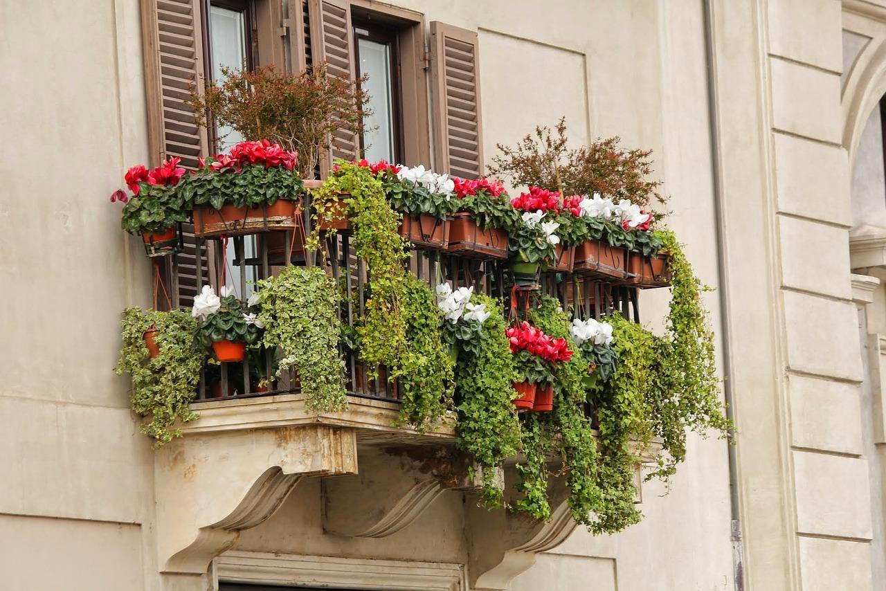 Как подобрать цветы для балкона? - описание, размножение, ух.