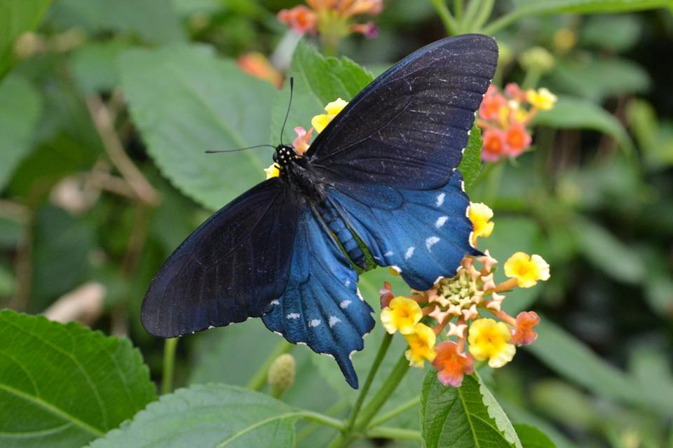 Blue, Butterfly, Garden, Bright, Animal, Insect, Summer