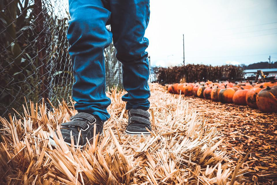 Boy, Child, Hay, Pumpking, Autumn, Fall, October