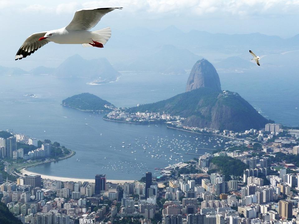 Rio De Janeiro, Mar, Ocean, Birds