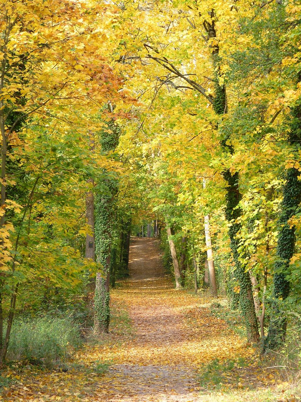 weg herbst bäume  kostenloses foto auf pixabay