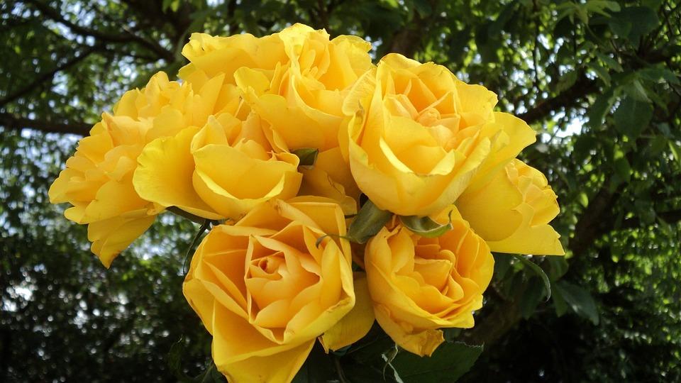Roses Bouquet Jaunes Photo Gratuite Sur Pixabay