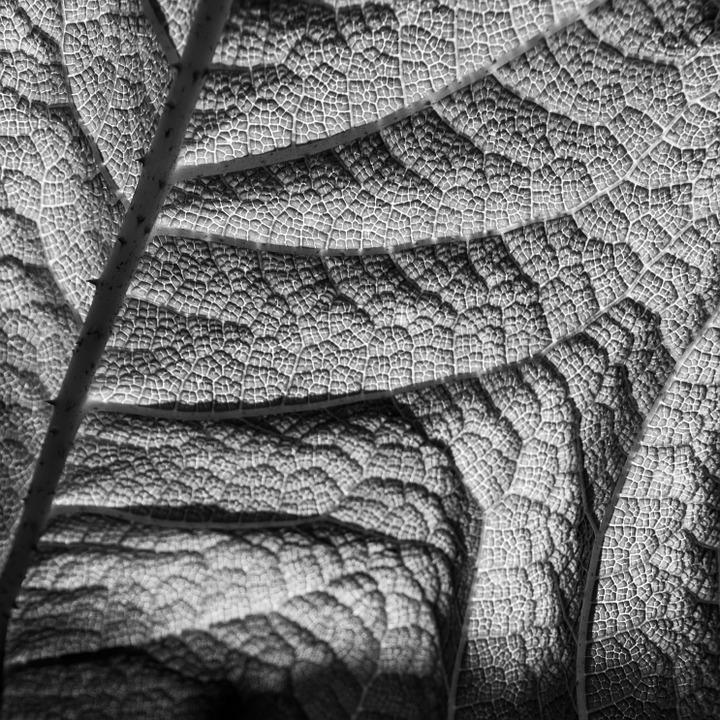 Free photo nature structure leaf texture free image for Structure photography