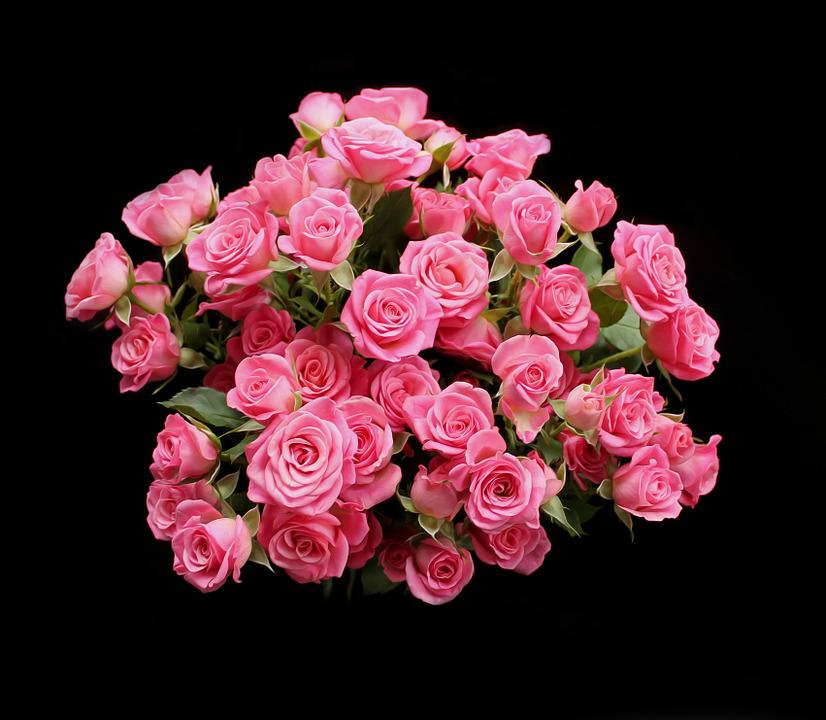 Roses pink saturday free photo on pixabay roses pink saturday pink red flowers bouquet mightylinksfo