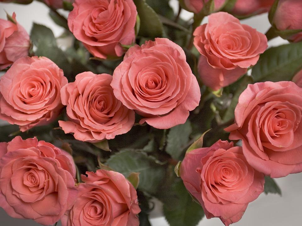 Rosas Color De Rosa Flores Foto Gratis En Pixabay