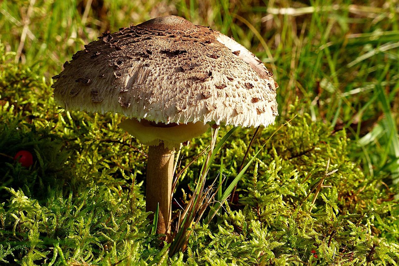 все грибы россии фото последней
