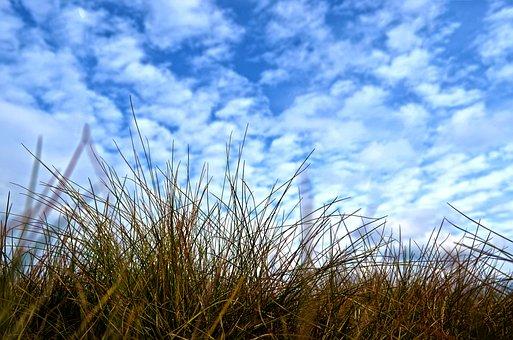 Nature, Grass, Sky, Heaven, Blue, Clouds
