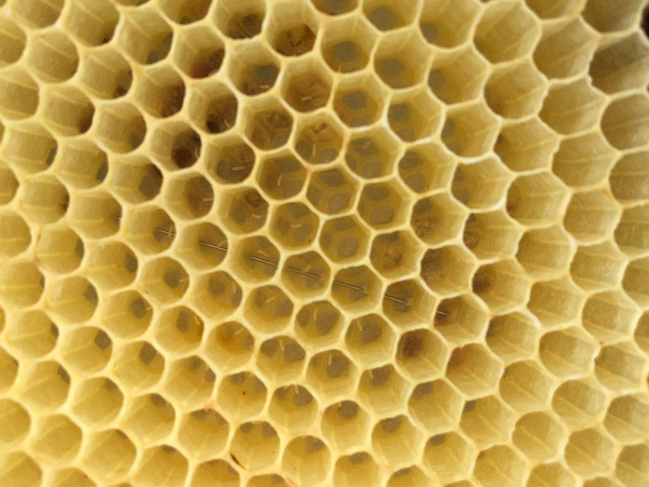 Соты пчелиные картинки