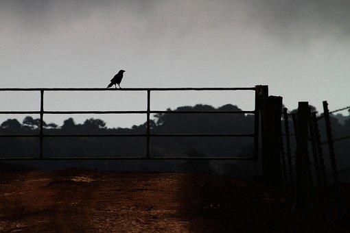 Crow On A Fence, Farm, Corvid