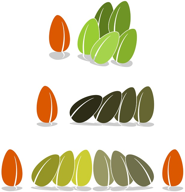 free illustration  seed  bean  bias  stock image - free image on pixabay