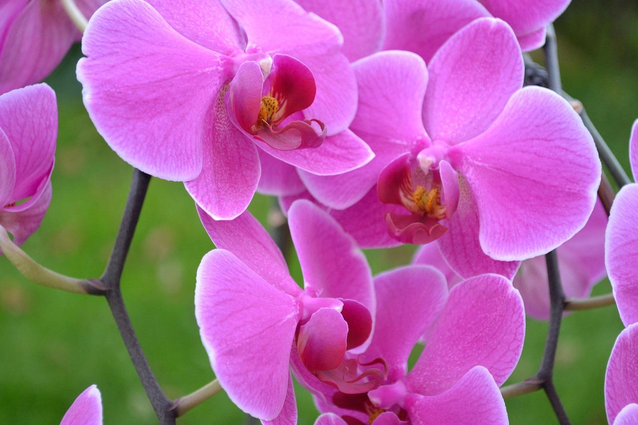 орхидея крупным планом фото вот посещение сауны