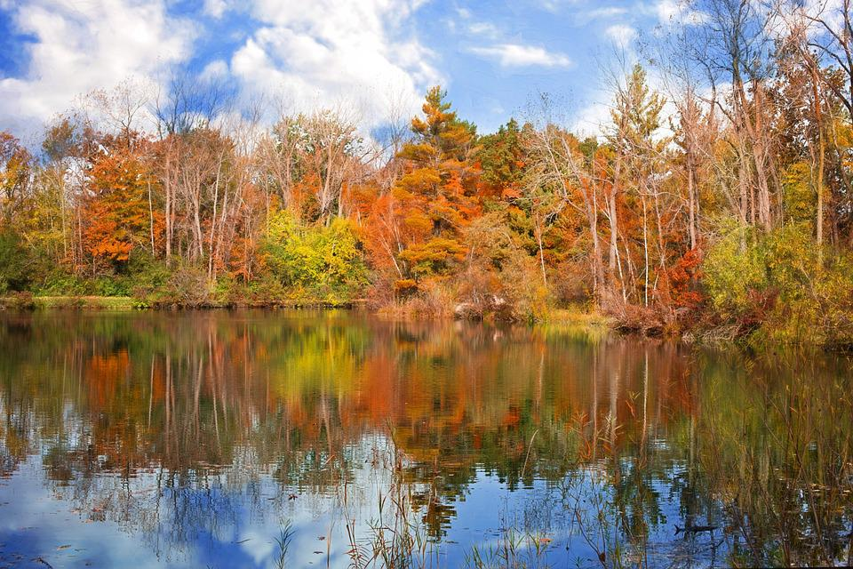 Autumn Fall Season Leaves · Free Photo On Pixabay