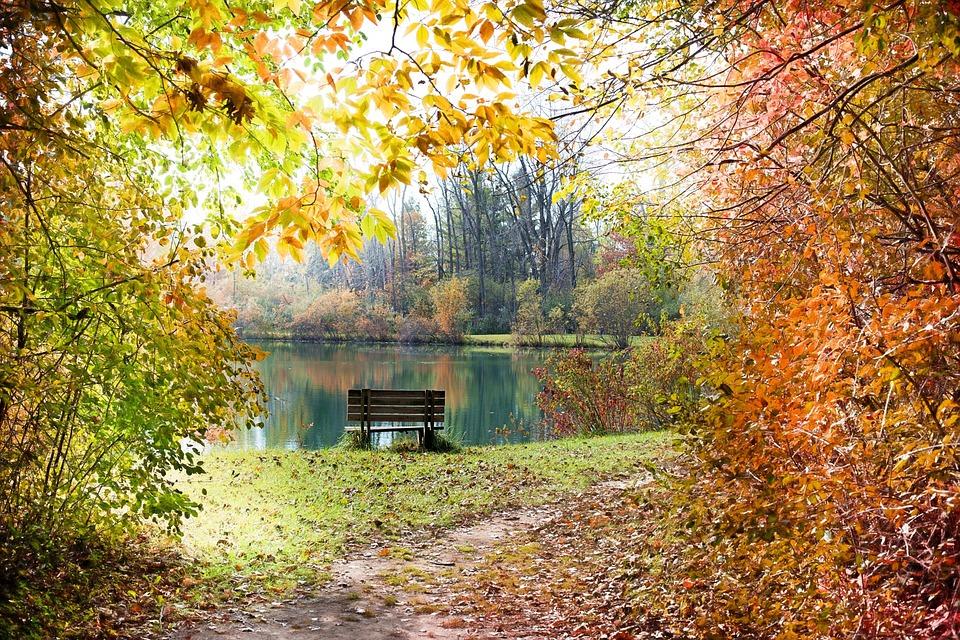 Free Photo: Autumn, Fall, Season
