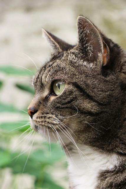 Photo Gratuite Cat Des Animaux Voir Le Profil Image