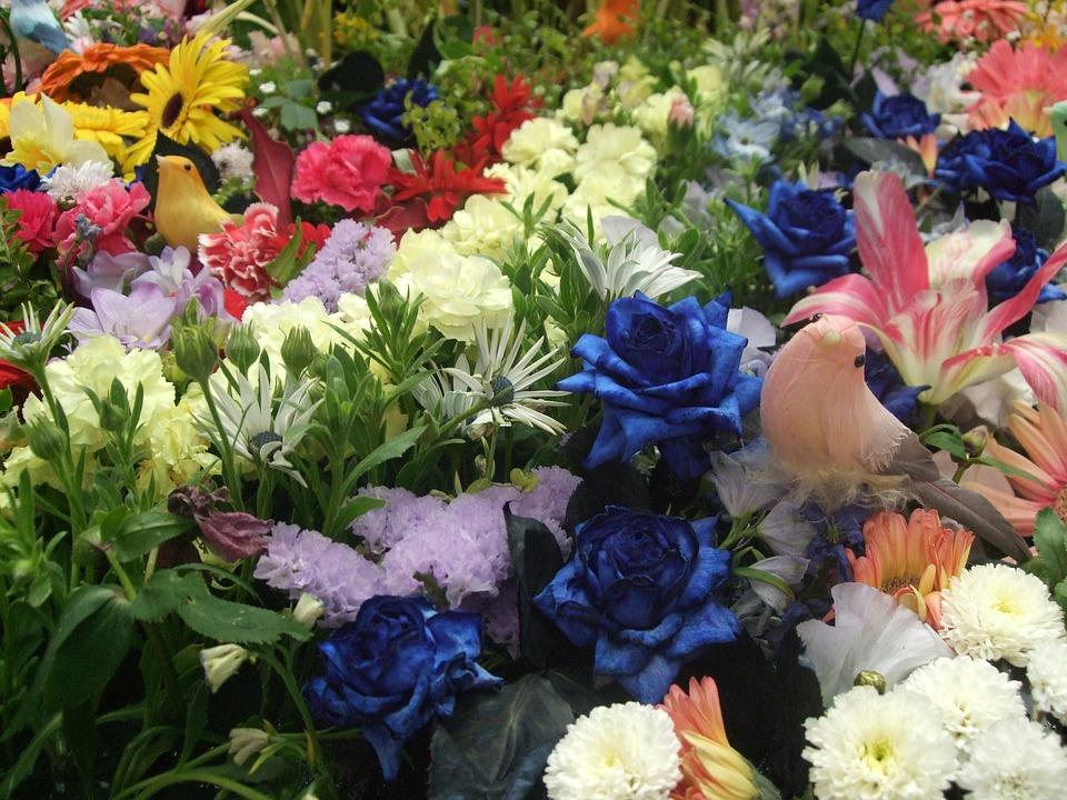 Foto gratis fiori giardino di fiore immagine gratis su for Giardino fiori