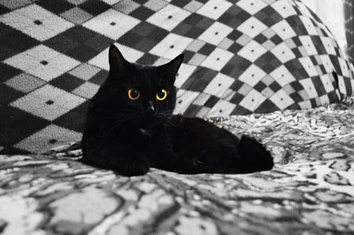 Cat, Pet, Animals, Fur, Black Cat