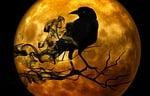 raven, crow, night