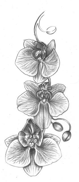free illustration  orchid  flower  drawing - free image on pixabay