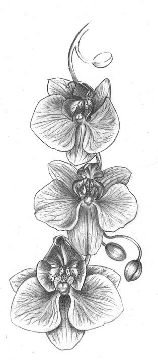 illustration gratuite orchid fleur dessin image gratuite sur pixabay 988503. Black Bedroom Furniture Sets. Home Design Ideas