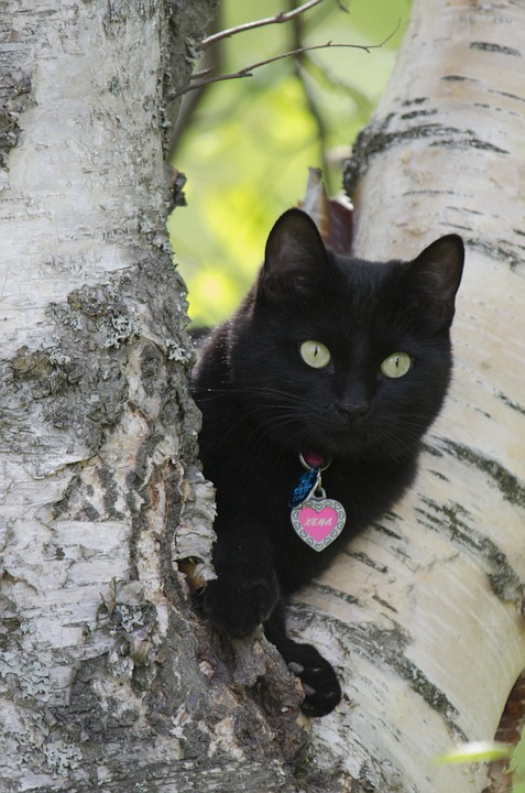 free photo cat black tree black cat free image on pixabay 989113. Black Bedroom Furniture Sets. Home Design Ideas