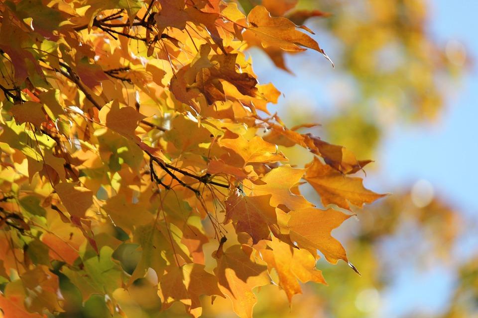 autumn fall tree backgrounds - photo #18