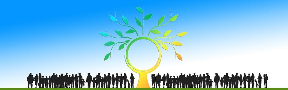 Drzewo, Estetyczny, Zaloguj Się, Korona, Energii
