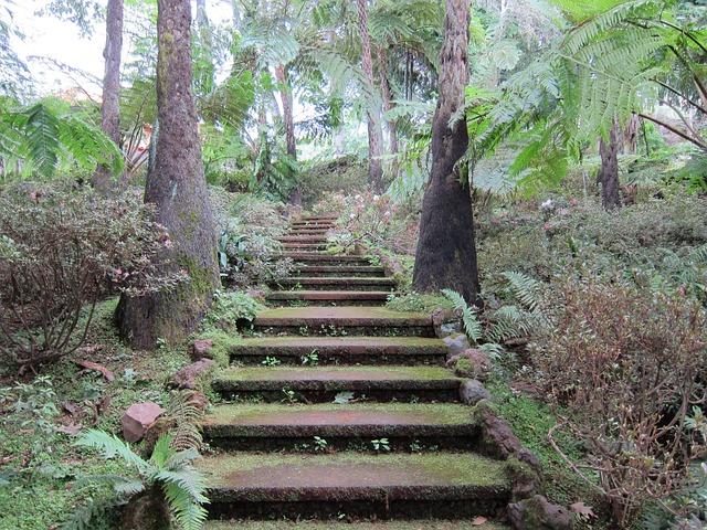 Free photo mystical stairs tropical garden free image - Treppenstufen garten ...