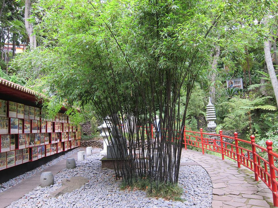 Free photo bamboo garden bamboo oriental free image for Bamboo garden