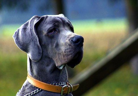 Dog, Black, Portrait, Animal, Blue, Rare