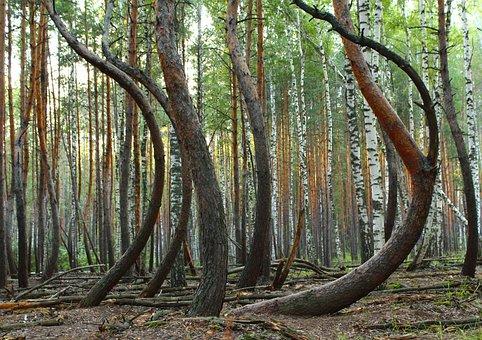 Floresta, Árvores, Herança Inesperada