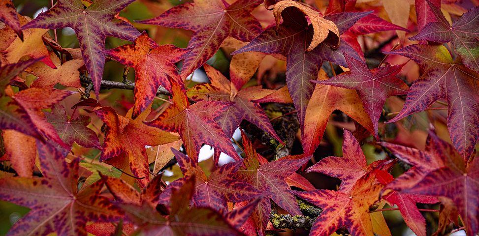 Autumn Falls 10