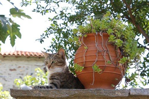 Grèce, Cat, Village, Vacances De Mur