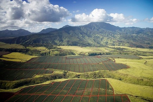 Pineapple Fields, Hawaii, Landscape
