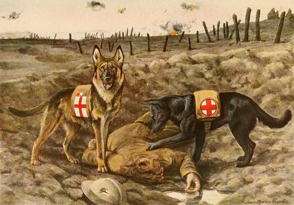 German Shepards, Dogs, Service Dogs, Ww1, World War One