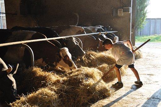 Эксперты проанализировали изменение пензенского мясного рынка за 9 лет