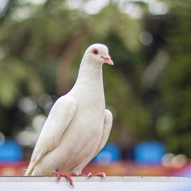 Фотки голубей белых