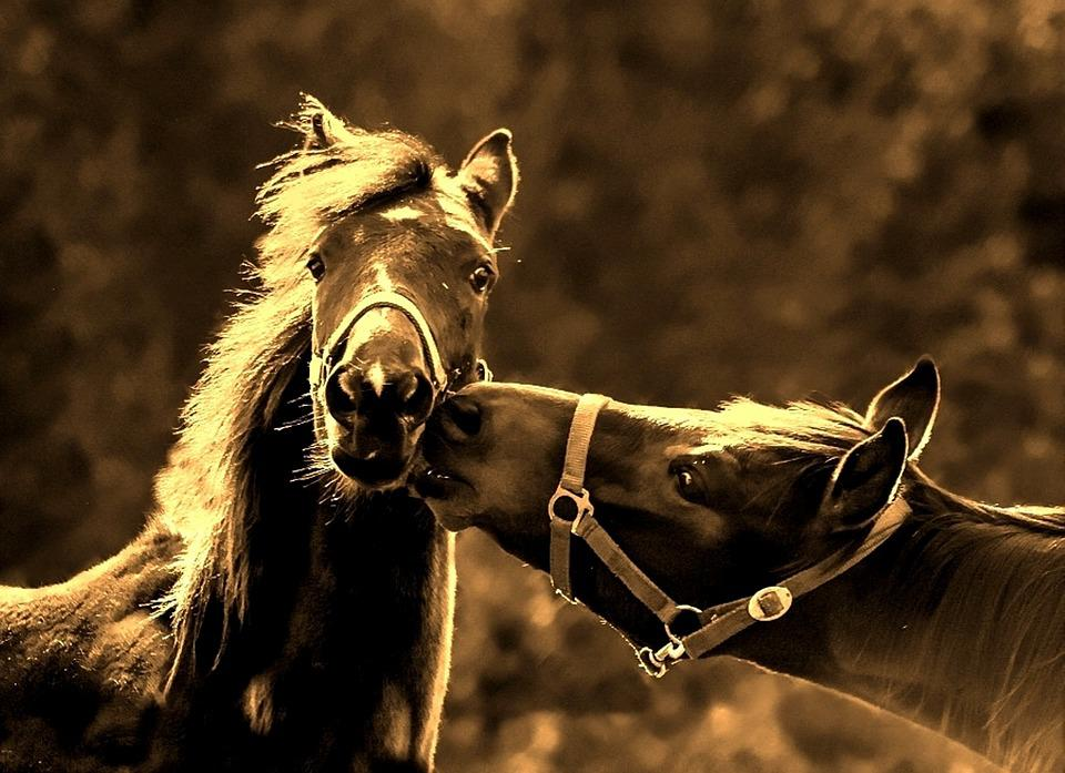 The Beauty Of Nature Horses