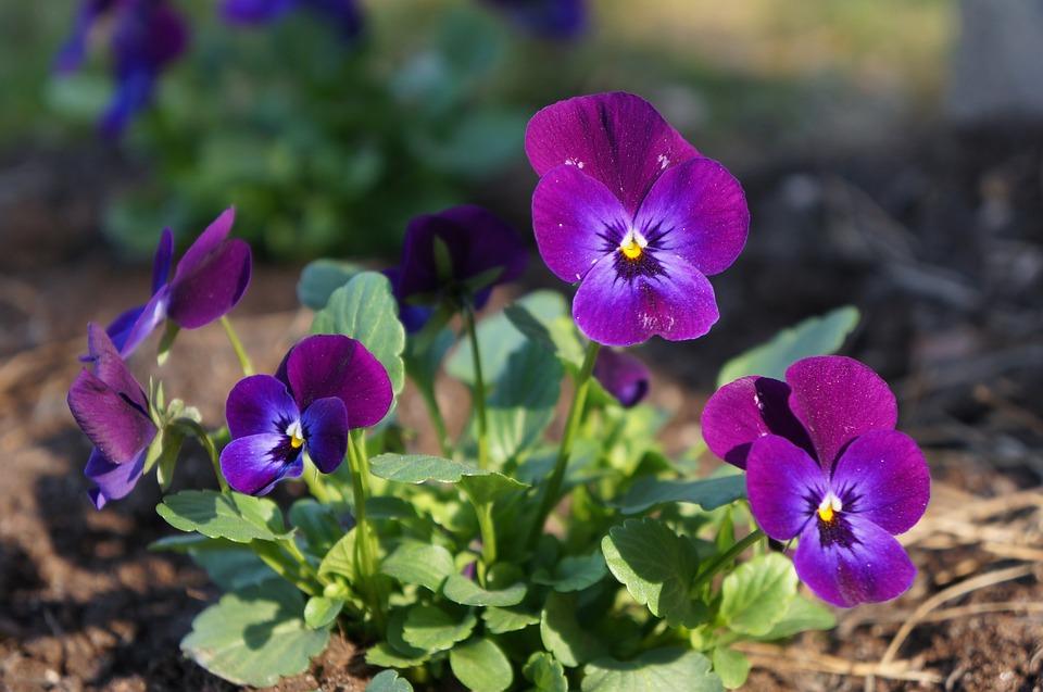 blommor i sverige bilder