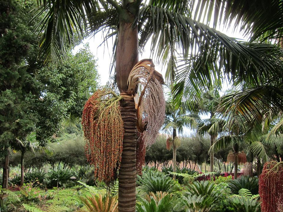 Botanica significado yahoo dating